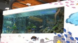 有楽町駅前広場に水槽がお披露目=『Sony Aquarium 2017』オープニングイベント (C)ORICON NewS inc.