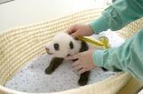 すくすく成長中(公財)東京動物園協会