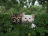 『劇場版 岩合光昭の世界ネコ歩き コトラ家族と世界のいいコたち』の場面写真 (C)Mitsuaki Iwago