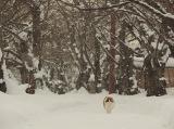 ミュウミュウ=『劇場版 岩合光昭の世界ネコ歩き コトラ家族と世界のいいコたち』場面写真 (C)Mitsuaki Iwago