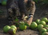 りんご農園で遊ぶコトラの仔猫たち=『劇場版 岩合光昭の世界ネコ歩き コトラ家族と世界のいいコたち』場面写真 (C)Mitsuaki Iwago