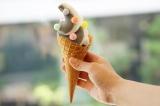 原宿・竹下通りにソフトクリーム専門店「coisof(コイソフ)」が人気!