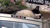 チェコの猫カフェ(C)テレビ東京