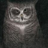 松本大洋氏が描いた「フクロウの声が聞こえる」ジャケット