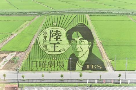 「陸王」田んぼアート(C)TBS