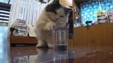 コップにいたずらするネコ(C)テレビ東京