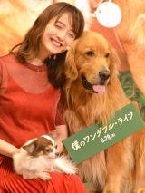 映画『僕のワンダフル・ライフ』イベントに出席した佐々木希 (C)ORICON NewS inc.