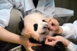 歯を確認しているところ(公財)東京動物園協会