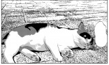 河原で出会った野良ネコ(C)此元和津也(秋田書店)/「セトウツミ」製作委員会