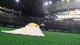 10月2日深夜スタート、HTBの新番組『夜のお楽しみ寝落ちちゃん』初回は1時間の生放送。札幌ドームで「全日本寝落ち選手権」開催。onちゃん、人工芝グラウンドの寝心地は?(C)HTB