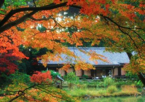 サムネイル 浄瑠璃寺の紅葉。写真提供/(一社)木津川市観光協会