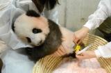 身体測定中(公財)東京動物園協会