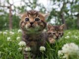 『劇場版 岩合光昭の世界ネコ歩き コトラ家族と世界のいいコたち』場面写真(C)Mitsuaki Iwago