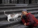 『劇場版 岩合光昭の世界ネコ歩き コトラ家族と世界のいいコたち』場面写真(C)Iwago Photographic Office