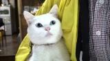 10月27日放送、テレビ東京系『超かわいい映像連発! どうぶつピース!』宝くじ猫(C)テレビ東京