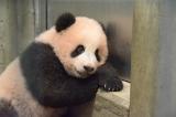 休憩中?(公財)東京動物園協会