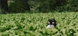 (左から)本間日陽、荻野由佳NGT48の2ndシングル「世界はどこまで青空なのか?」MVより