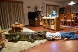『家に帰ると妻が必ず死んだふりをしています。』場面写真 (C)2017「家に帰ると妻が必ず死んだふりをしています。」製作委員会