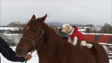 12月15日放送、テレビ東京系『超かわいい映像連発! どうぶつピース!』ちょっと変わった仲良しさんを特集。写真は馬の背中に乗ってお散歩する犬の例(C)テレビ東京