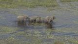 1月7日放送、TBS系『世界遺産』新春スペシャル「空から見る地球」より。ボツワナの湿地では、ゾウがつくった水中の獣道が網の目のように広がっていた(C)TBS