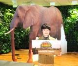 濱田岳、ゾウのパネルとともに=『濱田岳と地上最大獣アフリカゾウと過ごした8日間』記者会見 (C)ORICON NewS inc.