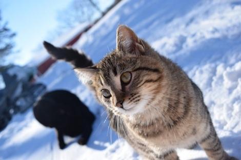 冬にかかりやすい猫の病気について紹介(写真はイメージ)