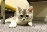 """広瀬すずが名付けた猫""""あのちゃん"""" (C)日本テレビ"""