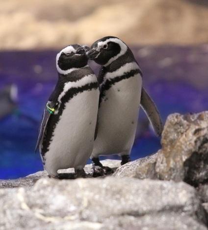 「水族館デート」を英会話で〜イムランの「週末何してた?」(写真は「すみだ水族館」のペンギンカップル)