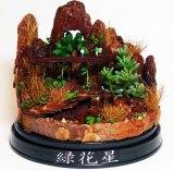 """ウッドチップの穴から多肉植物を通して滝を表現した""""植ラマ""""(写真提供 緑花星)"""