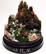 """苔とセダムで自然を表現した""""植ラマ""""(写真提供 緑花星)"""