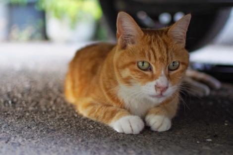 「猫バンバン」とは? 猫の命と自動車を守るための方法を紹介(画像はイメージ)