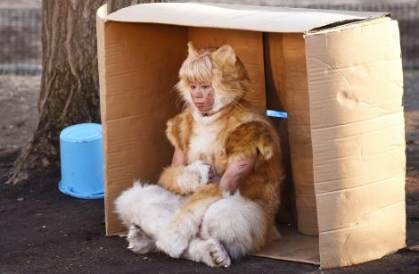 初主演映画『トラさん』で猫役を演じる北山宏光(Kis-My-Ft2) (C)板羽皆/集英社・「トラさん」製作委員会