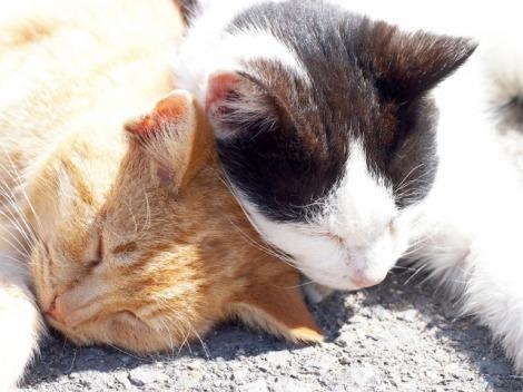 猫の恋の季節はいつ頃? 飼い主として考えたい、不妊治療について解説する(写真はイメージ)