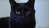 長い牙のヴァンパイア猫(C)テレビ東京