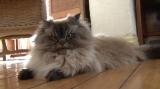 3月9日放送、テレビ東京系『超かわいい映像連発!どうぶつピース!』怒り顔の猫(C)テレビ東京