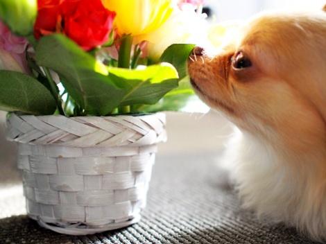 犬や猫が花粉症になった場合、ペット保険の補償対象になるのか解説する(画像はイメージ)