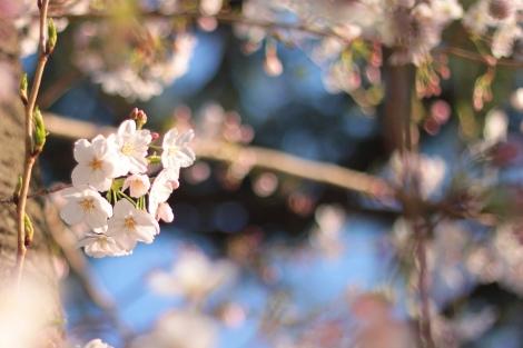 「お花見どこ行こう」を英会話で〜イムランの「週末何してた?」