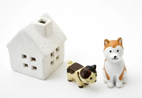 高齢のペットにかかる費用を軽減してくれる、ペット保険について紹介(画像はイメージ)
