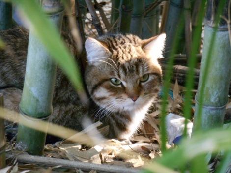 愛猫が行方知れずにならないための対策について解説(画像はイメージ)