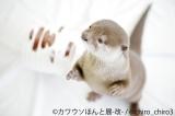 『カワウソほんと展 -改-』3月30日〜4月22日開催