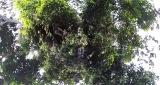 3月29日放送、NHK総合『超体感!エクストリーム・ミッション』野生動物のフンを命がけで採取する腸内細菌学者・牛田一成教授の壮絶な研究現場(C)NHK
