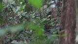 マルミミゾウ=3月29日放送、NHK総合『超体感!エクストリーム・ミッション』野生動物のフンを命がけで採取する腸内細菌学者・牛田一成教授の壮絶な研究現場(C)NHK