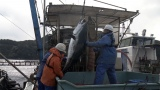 1本釣りに隠されたおいしさの秘密とは?=3月29日放送、NHK総合『超体感!エクストリーム・ミッション』(C)NHK