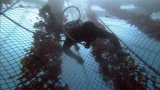 冷たい冬の海に潜る過酷な作業おいしいマグロを育てるために欠かせない=3月29日放送、NHK総合『超体感!エクストリーム・ミッション』(C)NHK