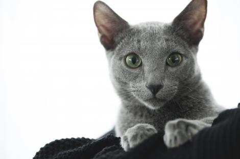 映画『猫は抱くもの』より猫の良男(C)2018「猫は抱くもの」製作委員会