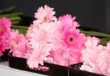 ファンからの献花に鮮やかなピンクのガーベラ=『hide Memorial Day 2018〜献花式〜』 (C)ORICON NewS inc.