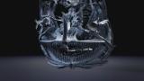 5月6日放送、Eテレ『サイエンスZERO』「世界記録更新!驚異の超深海魚」P・スワイヤーアイのCT画像(C)NHK