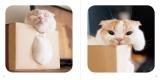 """癒しのネコ写真集 """"おてて""""""""おみあし""""に続く新作『ねこのおくち』"""