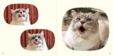 ネコのパーツ写真集第3弾『ねこのおくち』の収録カット