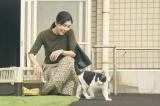 場面写真が公開された (C)2018「旅猫リポート」製作委員会(C)有川浩/講談社